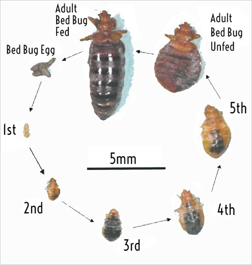 Chemicals Effective Against Bed Bugs
