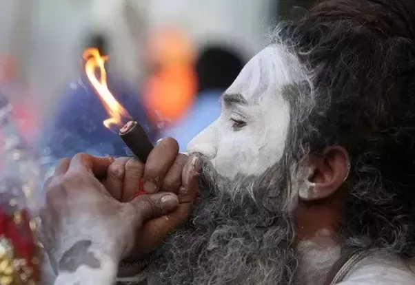 Bhang Ganja Lord Shiva S Devotees Would Be Joyous Of Cannabis Becoming Legalized In Canada Desibuzzbc